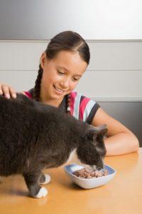 кошка ест консервы