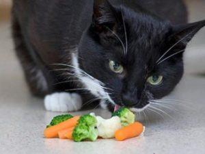 кошка ест овощи