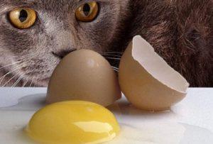 кошка смотрит на куриное яйцо