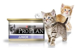 проплан влажный корм для котят