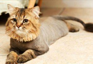 креативный грумминг кошки