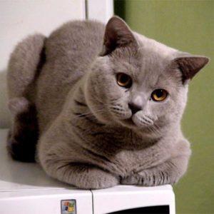 кошка наклонила голову