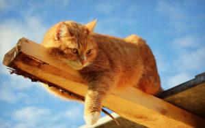 рыжий кот лежит на брусе