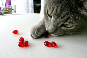 витамины и минералы для кошек