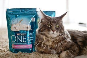 пурина ван для котят от 1 до 12 месяцев
