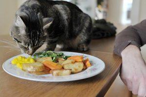 кошка ест овощи из тарелки
