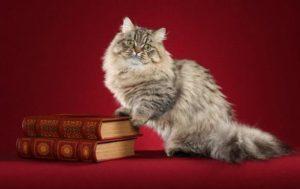 кошка наполеон с книгами