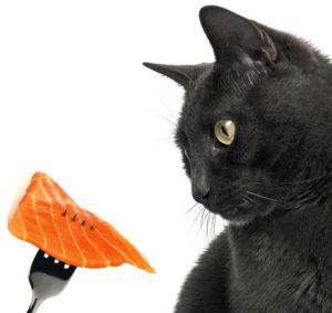 черный кот с кусочком рыбой