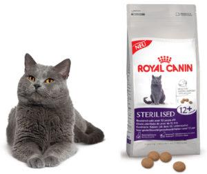 британский кот и роял канин
