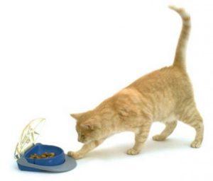 рыжий кот играет с сухим кормом