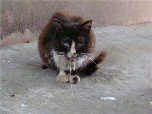 бешенство у бездомного котенка