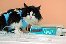 инфузионная терапия для кошки
