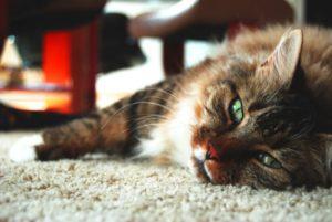 кот приболел и лежит на полу