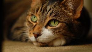 спокойный кот