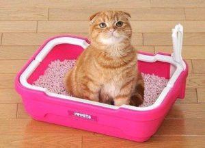 кошка сидит в розовом лотке
