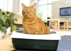 рыжий кот сидит в горшке
