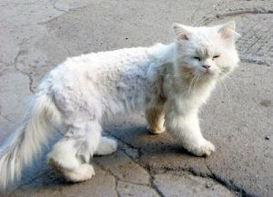 болезненный внешний вид у кошки