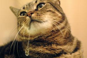 повышенное слюноотделение у кошки
