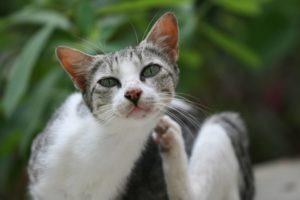 кошка чешет шею