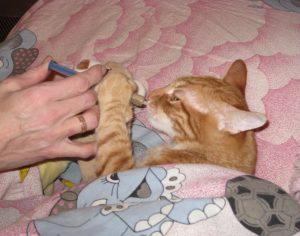 кота лечат от простуды