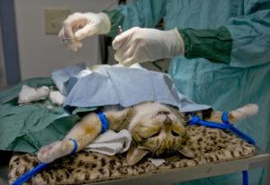 операция по удалению пиометры