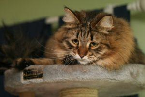 у кота глисты