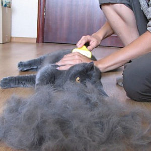 Паразиты в желудке у кошки