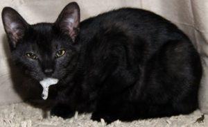 маниакальная стадия бешенства у кошек