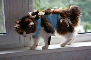 кошка после стерилизации на подоконнике