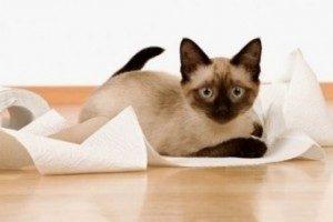котенок играет с туалетной бумагой