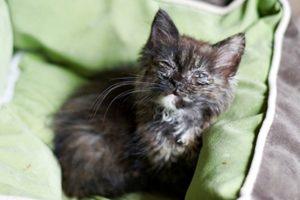 котенок болеющий чумкой