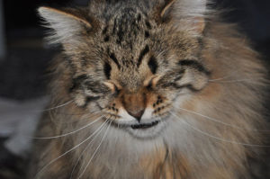 аллергия у кота