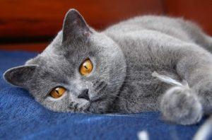 у кота апатия