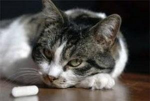 кошка с таблеткой