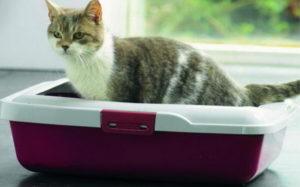 понос у полосатой кошки