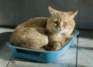 кот лежит в лотке