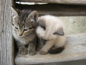 два котенка на лестнице