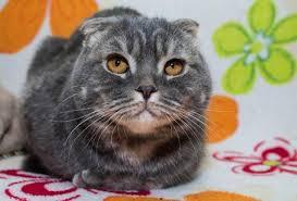 кошка под успокоительным