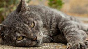 инсульт у кошки