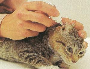 кошке закапывают уши