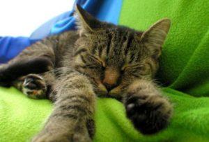 кот спит на зеленом покрывале