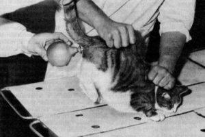 клизма кошке при запоре