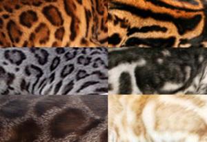 варианты окраса бенгальской кошки