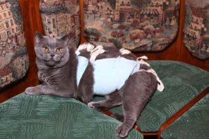 кошка после стерилизации кормление