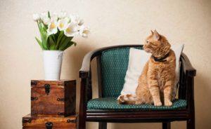 кошка в ощейнике
