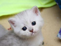 у котенка глисты