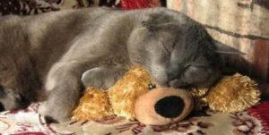 кошка спит на мягкой игрушке