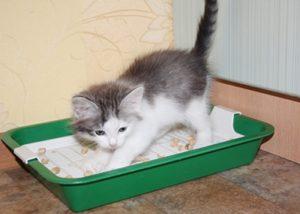 лоток для котенка