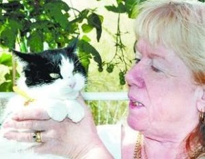 бирманская кошка леди каталина