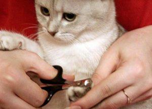 кошке подстригают когти